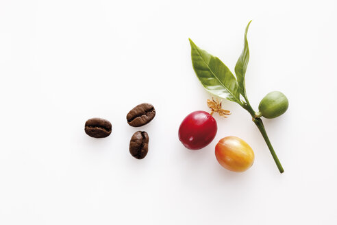 Coffee beans and leaves, elevated view - 12020CS-U