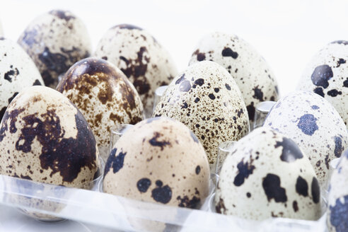 Spotted Quail eggs in egg box - MAEF02119