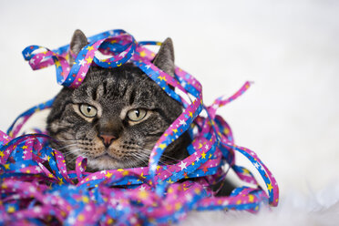 Male cat covered with streamers, close-up - FOF02045