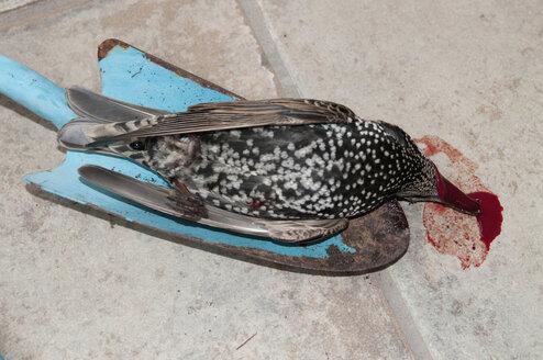Germany, Baden Württemberg, Stuttgart, Dead bird on shovel, elevated view - AWD00439