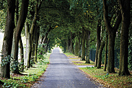 Germany, Country road lined with trees - 12126CS-U