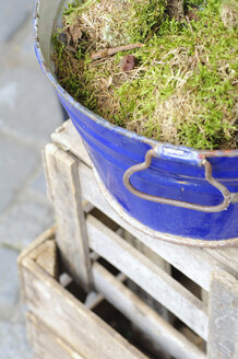 Germany, Munich, Moss in bucket, close up - COF00113