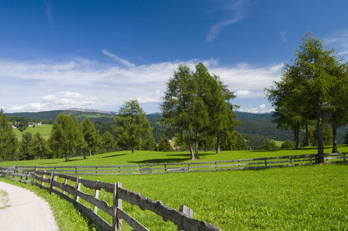 Italy, South Tyrol, Jenesien, Fence round trees with mountain in background - SMF00603