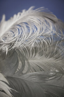 Germany, Stralsund, Close up of seagull feather - TLF00440
