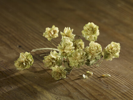 Dried hops on wooden surface - SRSF00204