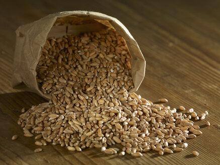 Spelt grain spilling on wooden surface - SRSF00174