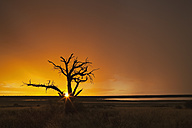 Africa, Botswana, Mabuasehube, View of Bare tree at sunset in kgalagadi transfrontier park - FOF002145