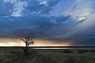 Africa, Botswana, Mabuasehube, View of bare tree at Mabuasehube Pan - FOF002155