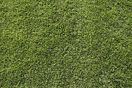 Germany, Bavaria, Icking, Football ground grass, close up - TCF001348