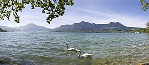 Austria, Salzkammergut, Mondsee, View of ducks with mountains in background - WWF001425