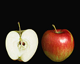 Apples against black background - PSF000593