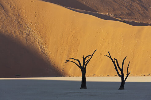 Africa, Namibia, Namib Naukluft National Park, Dead tree in namib desert - FOF002359