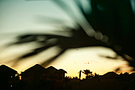 Mexico, View of silhouette houses and palm tree - MFF000414