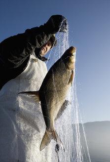 Austria, Mondsee, Fisherman caught a fish in fishing net - WWF001684