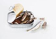 Can of sardine on white background, close up - WBF000295