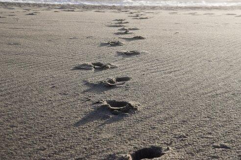 Denmark, Vrist, Footsteps on wet beach - HKF000299