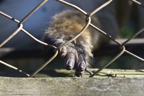 Thailand, Pai, Close up of monkey's hand in cage - HKF000327