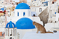Europe, Greece, Cyclades, Thira, Santorini, Oia, Cat sitting on wall - FOF002738