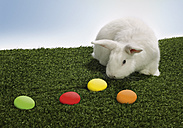 Rabbit sniffing easter eggs - WBF000824