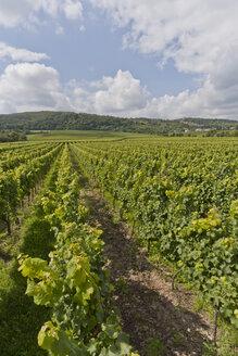 Germany, Rhineland-Palatinate, Palatinate, Wachenheim an der Weinstraße, View of vineyard - WDF000758