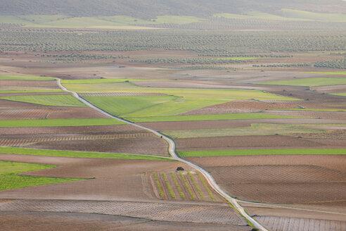 Spain, Castilla-La Mancha, Toledo Province, Consuegra, View of dirt road passing through fields - RUEF000609