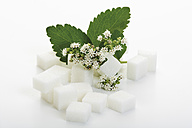 Sugar lumps and stevia leaves with blossom on white background - CSF014147