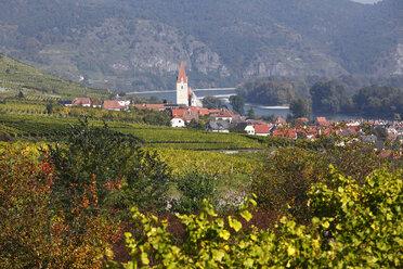 Austria, Lower Austria, Waldviertel, Wachau, Weissenkirchen, View of Vineyard and village with Danube river - SIEF000119