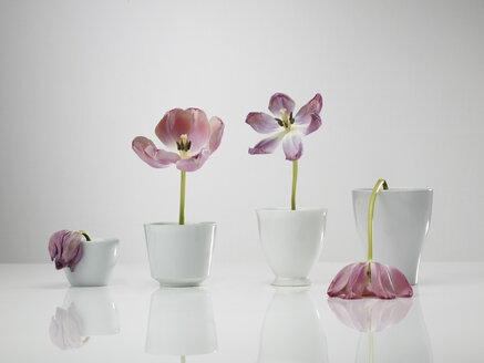 Chart built of tulip flowers vases against gray background - AKF000244