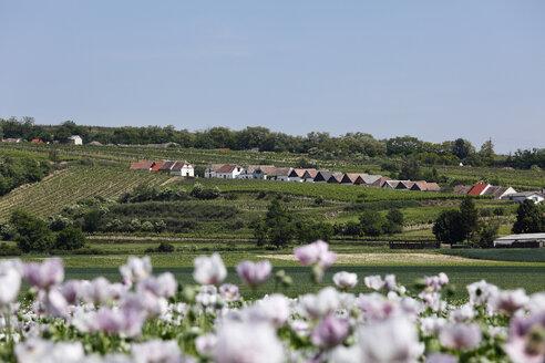 Austria, Lower Austria, Weinviertel, View of kellergasse in haugsdorf - SIEF000682