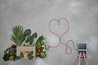 Laptop and vegetables connected through electric wire on gray background - BAEF000172