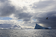 South Atlantic Ocean, Antarctica, South Shetland Islands, View of iceberg in front of Elephant Island and seagull flying over sea - FOF003240
