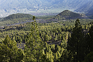 Spain, Canary Islands, La Palma, View of pine forest - SIEF000755