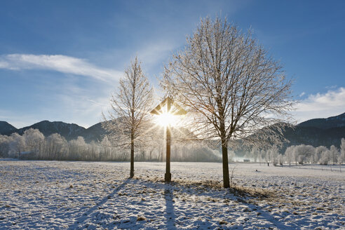 Germany, Bavaria, View of bare trees with frost and mountain in Bavarian foothills of alps - FOF003354