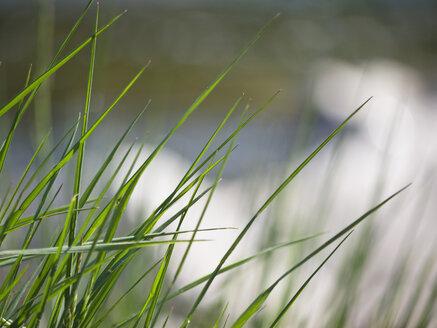 Germany, Bavaria, Munich, Close up of grasses at Isar river - LFF000274