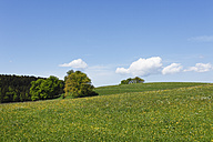 Germany, Bavaria, Upper Bavaria, Muensing, View of meadow landscape in spring - SIEF001568