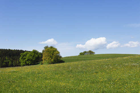 Germany, Bavaria, Upper Bavaria, Muensing, View of meadow landscape in spring - SIEF001568