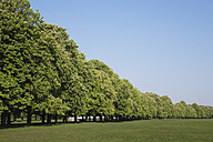 Germany, Cologne, Decksteiner Weiher, Green Belt, View of chestnut tree at city park - GWF001484