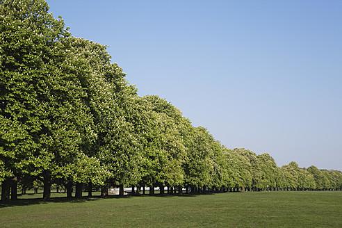 Germany, Cologne, Decksteiner Weiher, Green Belt, View of chestnut tree at city park - GWF001484