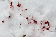 Europe, Germany, Crime scene with bloodstain in snow, close up - AWDF000633