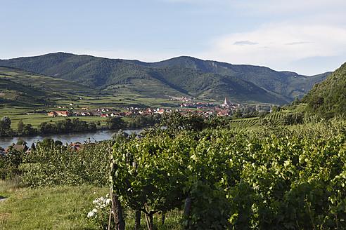 Austria, Lower Austria, Wachau, Weissenkirchen, View of village with Danube river and vineyard in foreground - SIEF001656