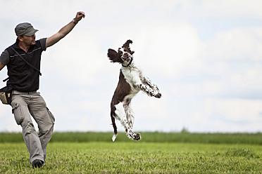 Germany, Lower Bavaria, Man training English Springer Spaniel in grass field - MAEF003534
