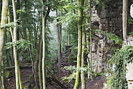 Germany, Rhineland-Palatinate, Eifel Region, South Eifel Nature Park, View of bunter rock formations at beech tree forest - GWF001527
