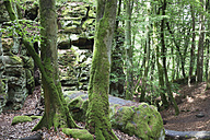 Germany, Rhineland-Palatinate, Eifel Region, South Eifel Nature Park, View of bunter rock formations and moss covered tree trunks at beech tree forest - GWF001535