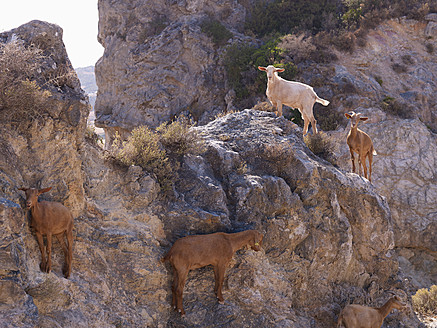 Spain, Andalusia, Casares, Mountain goats on rocks near white mountain village - BSCF000058