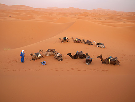 North Africa, Morocco, Merzouga, Tuareg guide with camels at Erg Chebbi desert - BSC000073