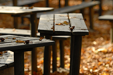 Germany, Bavaria, Wood benches in beer garden - DKF000172