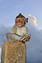 Indonesia, Bali Island, Bukit peninsula, Monkey sitting on stone - WVF000189