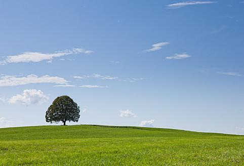 Germany, Bavaria, View of tree on landscape - FLF000014
