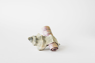 50 Dollar note rolled in snail shell, close up - GWF001624
