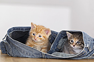 Germany, Kittens sitting in jeans, close up - FOF003648